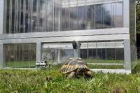 Schildkröten-Haus TOP 100