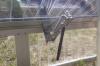 Automatischer Fensterheber für BELLA