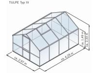 Gewächshaus Tulpe IV